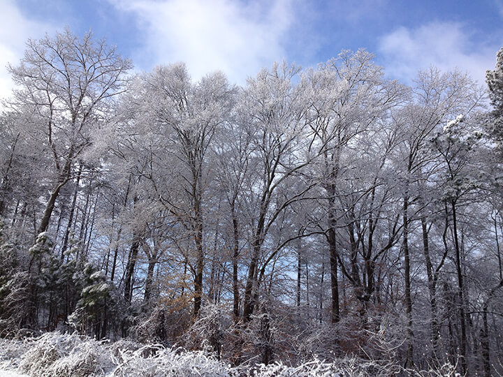 Trees covered in ice during Atlanta snow 2014.